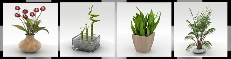 Home Plants 3D Models